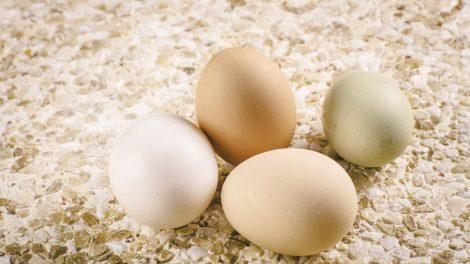 Onde comprar ovo para revender?