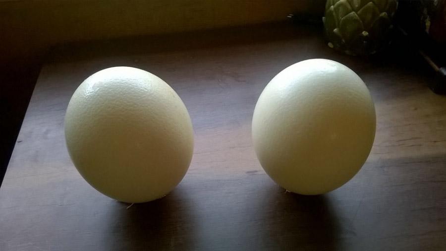 Ovo de avestruz é comestível?