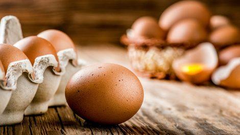 Proteína do ovo
